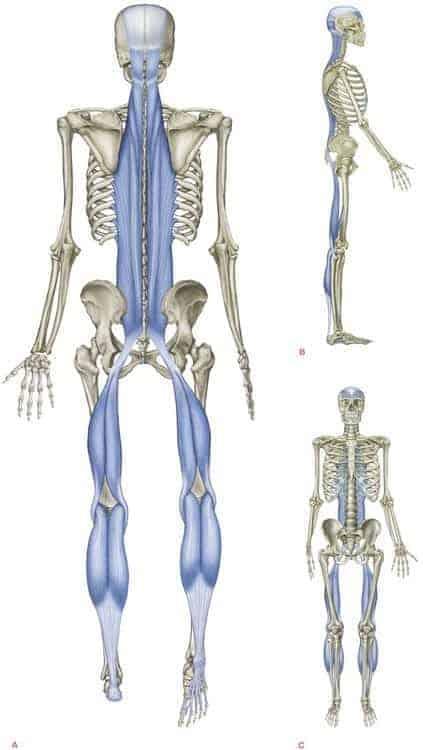 Skeleton highlighting the back line