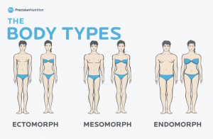 Body type image from Precision Nutrition to emphasize the Endomorph Diet