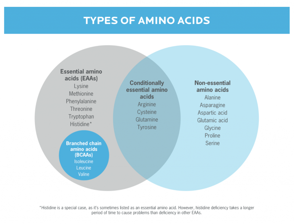 Image of types of amino acids to illustrate protein supplementation