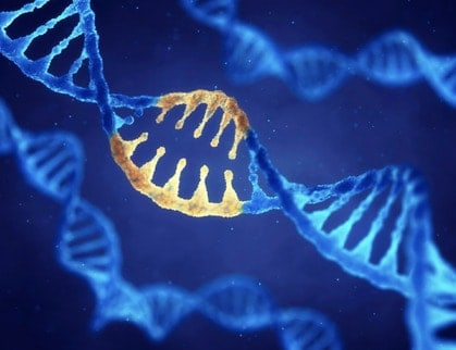 Picture of a string of genes to illustrate the genetic connection to the performance enhancing benefit of caffiene