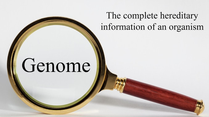 Image of a magnifying glass with the word genome to illustrate the role of genetics and recovery
